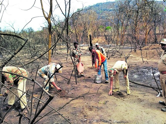 Forest department personnel sow seeds in a fire-hit region on Gopalaswamy Hill. DH Photo