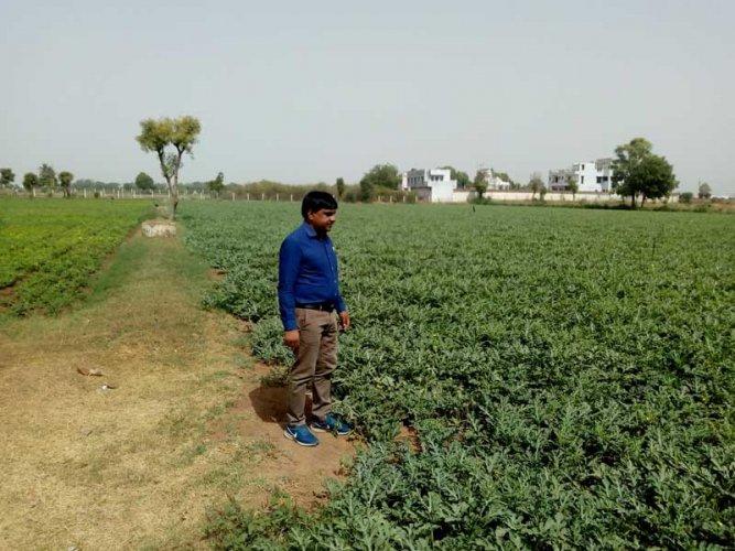 Farmer Fulchand Kachchawa at his farm in Deesa town. (DH Photo/Satish Jha)