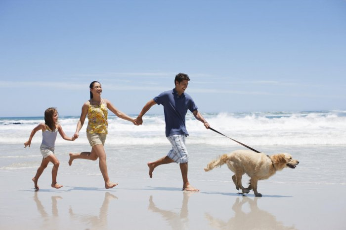 As an emerging pet-friendly destination, India is trying to make avenues for your canine family.