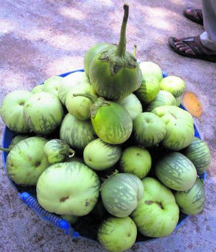Udupi Mattu Gulla brinjal has a Geographical Indication (GI) tag.