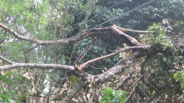 The power supply was disrupted after branches of a tree fell on an electricity wire in Bethu village near Napoklu on Monday.