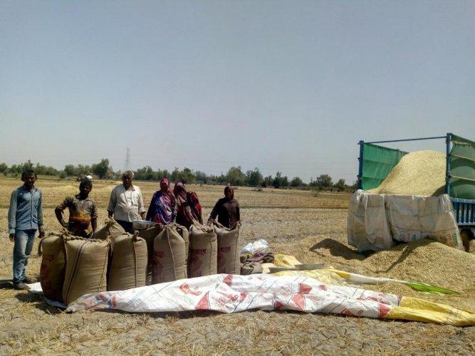 Farmers in Mehsana.