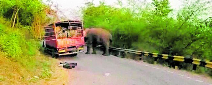 A video clip of an elephant approaching a tempo on Shantaveri Ghat has gone viral on social media.