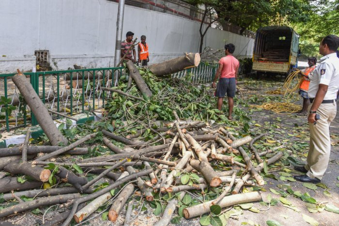 BBMP Forest division workers removing tree branches, which is fell down on road due to heavy wind and rain at Vidhana Soudha road near Basveshwara Circle (Chalukya Circle) in Bengaluru on Wednesday. (DH Photo by S K Dinesh)