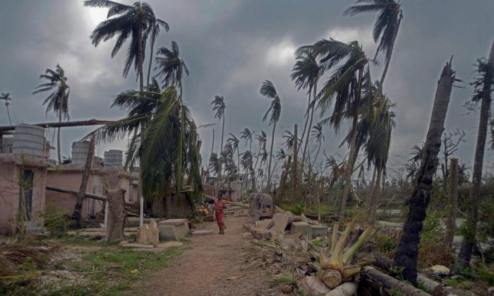 Uprooted trees in the aftermath of cyclone 'Fani'. (PTI File Photo)