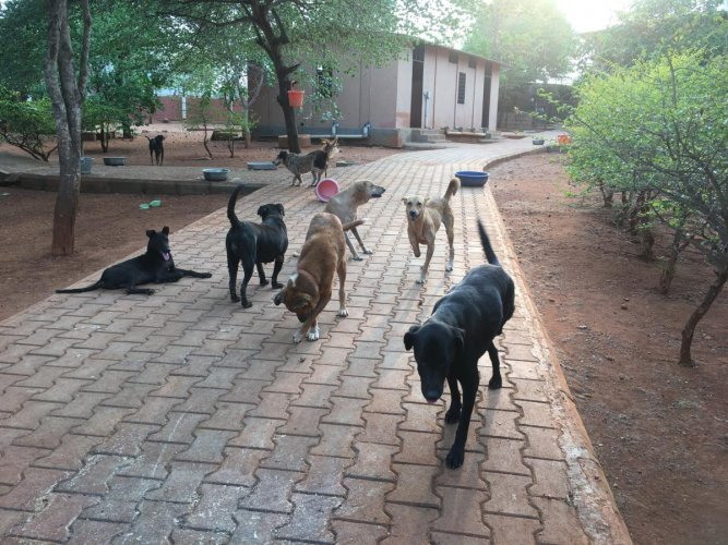 After drawing flak over the dog menace in Bengaluru, the Bruhat Bengaluru Mahanagara Palike (BBMP) will take up the much delayed canine census. And to rule out any errors, the BBMP will adopt scientific methods like face and skin recognition tools in the