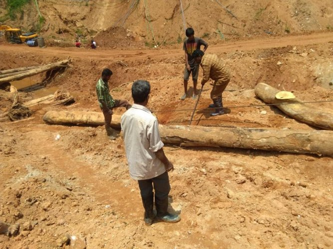 The trees that were washed away during the floods last year, are being cleared by the forest department at Madenadu in Madikeri taluk.