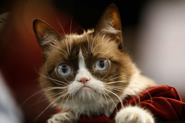 In this file photo taken on September 7, 2015, Grumpy Cat attends the MLB game between the Arizona Diamondbacks and the San Francisco Giants at Chase Field in Phoenix, Arizona. (AFP File Photo)