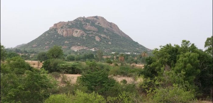 Participatory: A view of Mugadal Betta in Pavagada taluk. Restoration efforts by villagers, which included protecting its vegetation and a plantation drive, have given a new lease life to this hill and four other hills in the region. photos by author