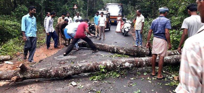 Villagers clear a tree that fell on a road at Mallara near Subrahmanya.