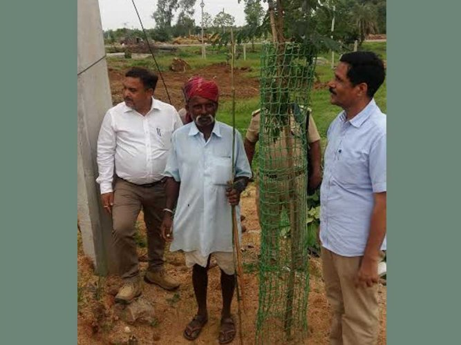 Plastic tree guards to save saplings and a guard to safeguard the guards