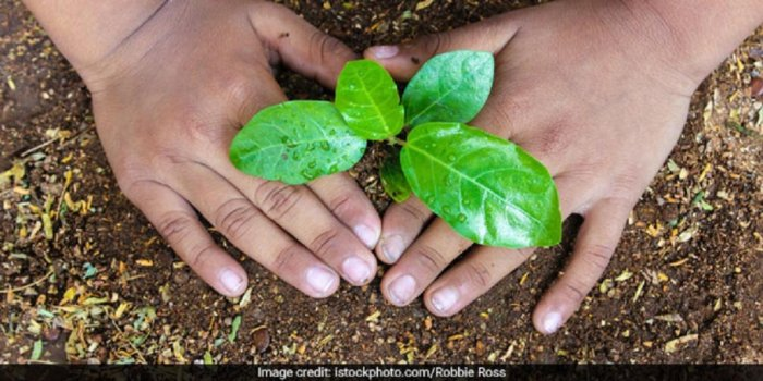 Delhi govt assures to plant 1.4L saplings after HC warns of contempt action. (File Photo)