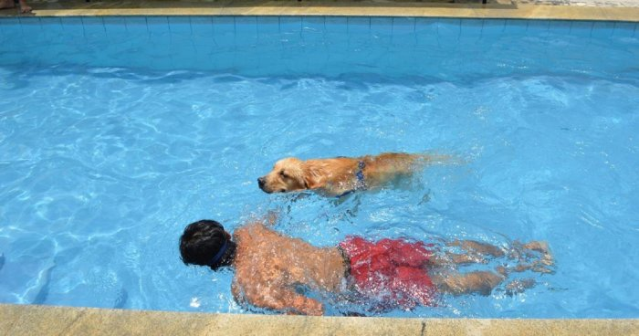 Swimming is a natural stimulation and workout for dogs. (Above) At Canaan Pet Resort.