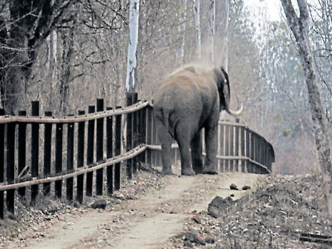 A terminally ill 55-year-old female elephant may face euthanasia as the last option in case veterinarians fail to cure the disease that the animal has been suffering since long. File photo for representation