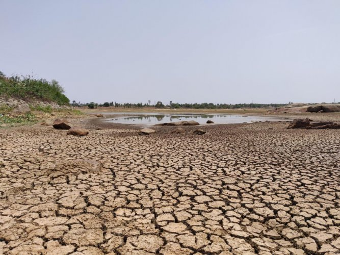 Dried lake beds, like the one at Devarayasamudra lake, are common sights in many parts of Kolar and Chikkaballapur districts. DH Photo