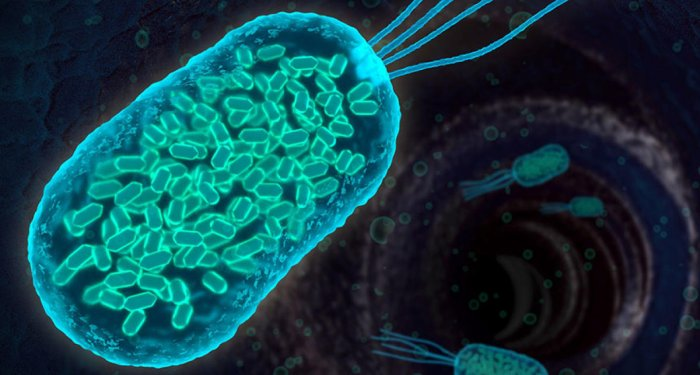 Scientists have identified a species of bacteria in the human infant gut that protects against food allergies and may be used in therapies to reverse the condition. (DH Photo)