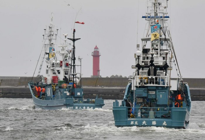 Whaling ships set sail on July 1 from Japan as the country resumed commercial hunts for the first time in decades after withdrawing from the International Whaling Commission. (AFP Photo)