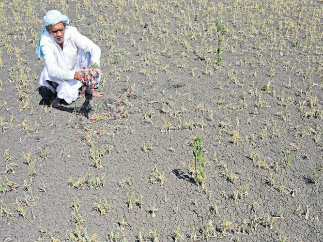 Last year, the Bihar Government had declared 28 districts as drought-hit following deficient rainfall. It had distributed over Rs 1000 crore as financial assistance to farmers to cover their crop damages. DH file photo