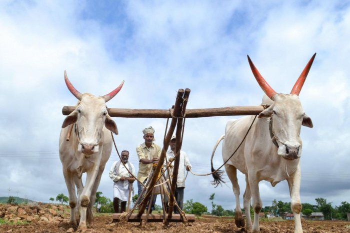 Farmers plough their field as they sow soyabean at a field in Ghogaon village near Karad, Friday, July 5, 2019. Finance Minister Nirmala Sitharaman said the government will invest widely in agriculture infrastructure and support private entrepreneurship for value addition in farm sector. (PTI Photo)
