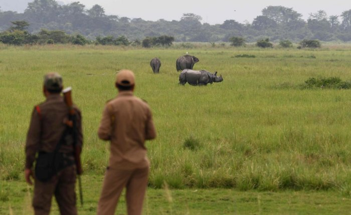 Forest guards watch as a one-horned rhinoceros grazes along with elephants in Kaziranga National Park. (AFP Photo)