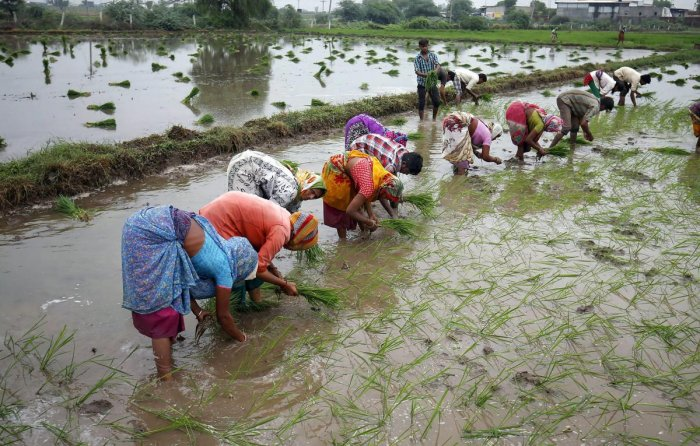 India should provide incentives to farmers to adopt efficient water use to avert a looming crisis, according to the Economic Survey presented by Finance Minister Nirmala Sitharaman in parliament. PTI file photo
