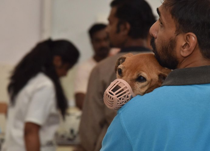 BBMP officials said hundreds of unauthorised pet shops and breeders are doing business with fake or no permits. DH FILE