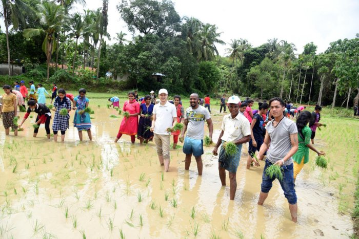 Foreign students and NSS volunteers of Mangalore University transplant paddy seedlings at a field in Kallimaru in Konaje on Saturday.