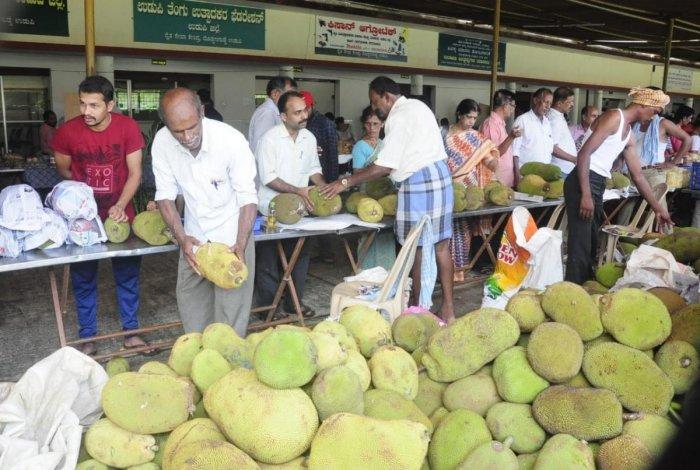 Chandra halasu and Rudrakshi varieties from Toobugere in Doddaballapura on display at the jackfruit mela being held at the Raitha Seva Kendra in Doddanagudde horticulture centre on Saturday.