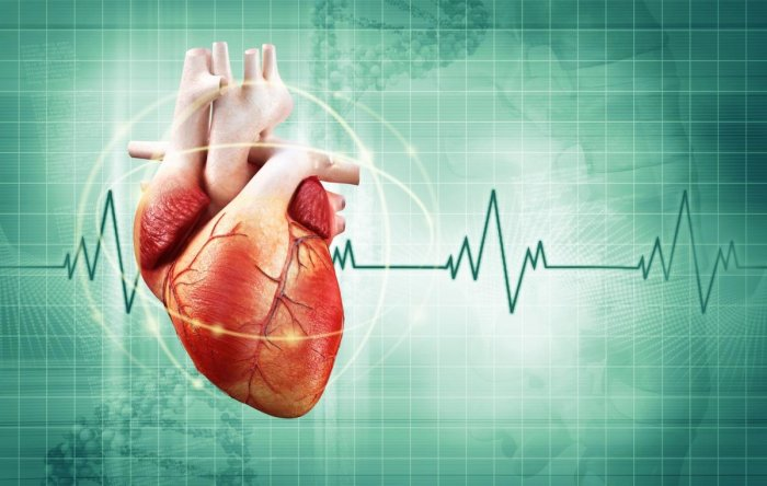 Researchers have discovered a previously unidentified cell population which could lead to new treatments for patients with injured hearts. (File Photo)