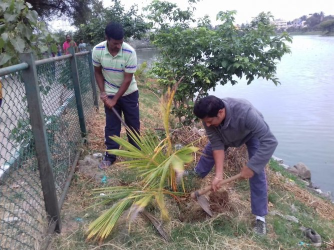 Volunteers have taken up a 30-day challenge to tend to coconut saplings at Segehalli Lake in East Bengaluru.