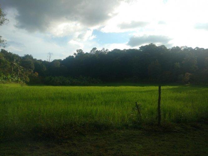 A verdant land along the Western Ghats through which Hubballi-Ankola Railway line will pass through.