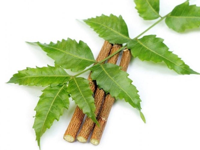 Experts have been working on neem as an alternative to synthetic pesticides. picture for representation only