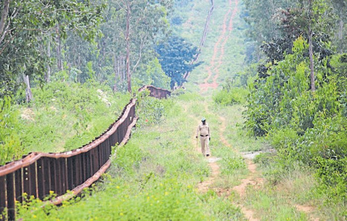 From digging deep into departmental archives to battling out in various courts, the Forest department is struggling to safeguard its green cover from land sharks. The department is flooded with complaints about fresh cases of land encroachment across the state. DH file photo