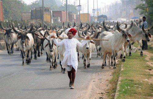 Three booked under Maharashtra's new beef ban law