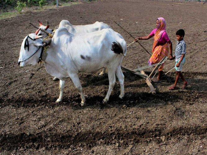 420 million dollar project for Maharashtra farmers