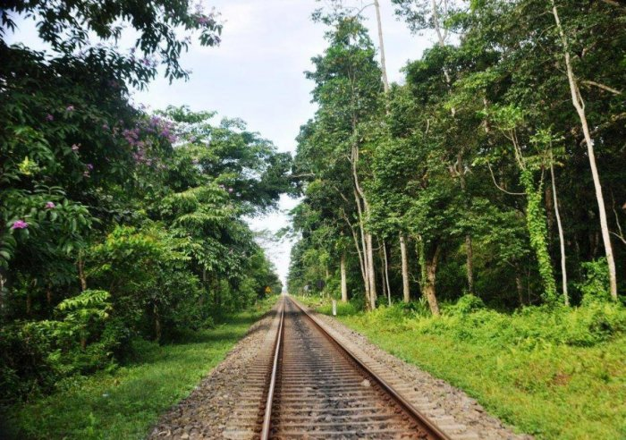 The tree canopy over the tracks allows animals to cross over easily. DH photo