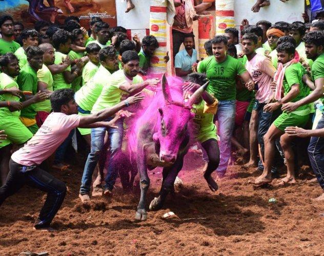 3 killed in bull-taming sports in Tamil Nadu