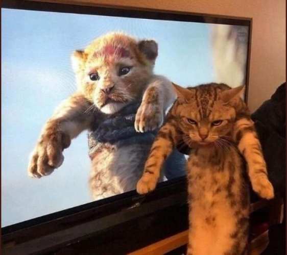 The responses to Lion King has been wige-ranging, from anger to laughter to nostalgia to self-deprecation. And social media is lapping it all up.