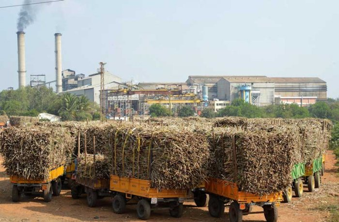 Bumper sugarcane harvest over the past few years has led to record sugar production, leading to low prices making it difficult for mills to pay the cane growers. (DH File Photo)