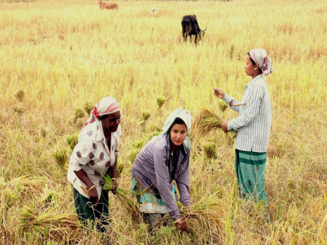 Member farmers of the DDS exhibited 11 such plants that grow before the Kharif season, in time to save them from hunger. PTI file photo