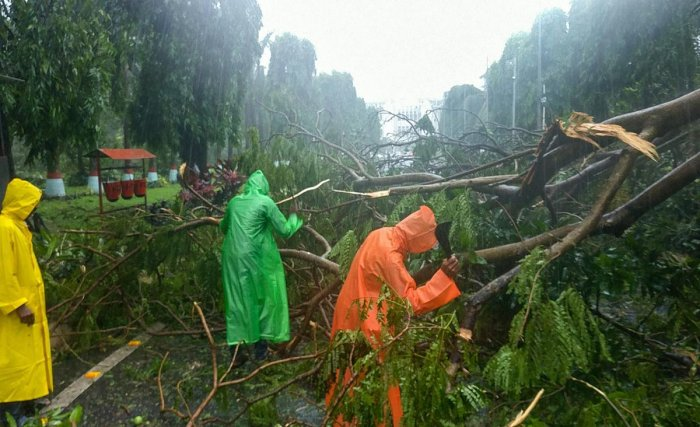 A wind uprooted trees are removed from a road after Cyclone Fani made landfall, in Bhubaneswar, Friday, May 3, 2019. (PTI Photo)