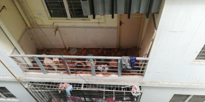 The dog, tied and left in the apartment balcony died due to starvation.