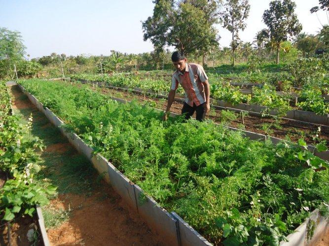 Nutritious Views of Akshayakalpa farm at Dasarighatta in Tiptur. Photos by Author