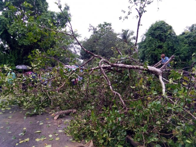 """The Congress on Saturday attacked the government for allowing cutting of over 1 crore trees for development projects since 2014 as the party wondered if the """"BJP is destroying our future"""". (Image for Representation)"""