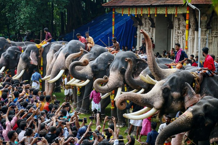 Kerala is witnessing a fresh row over the stringent norms being mooted by the government to curb exploitation and cruelty towards captive elephants. (PTI Photo)