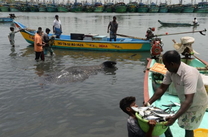 Seven Tamil Nadu fishermen were arrested on Sunday by Sri Lankan naval personnel off Nedunthivu for allegedly fishing in the island nation's territorial waters. File photo for representation