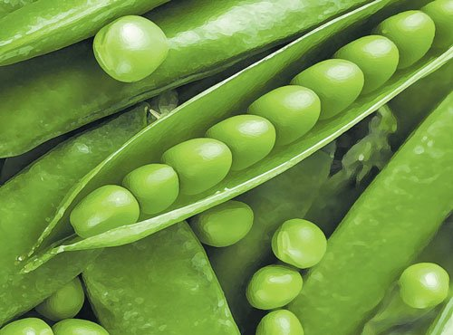 Excessive consumption of green peas may cause paralysis, scientists find