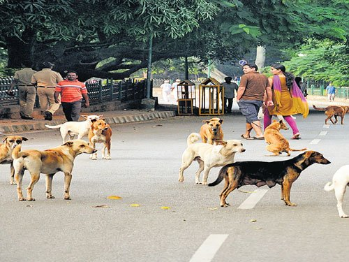 Three, including 6-mth-old baby girl, bitten by dogs in Kerala