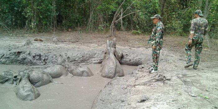Six baby elephants separated from their parents and trapped in a muddy pit for days have been rescued by park rangers in rural Thailand. AFP PHOTO / Thailand's Department of National Parks, Wildlife and Plant Conservation