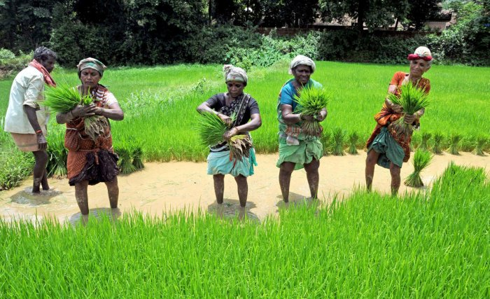 The MPs complained that several farmers in Maharashtra have not received adequate compensation for their losses under the crop insurance scheme. File photo